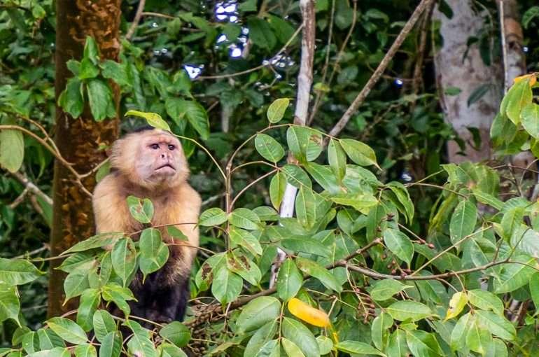 Panama eläimistö feature