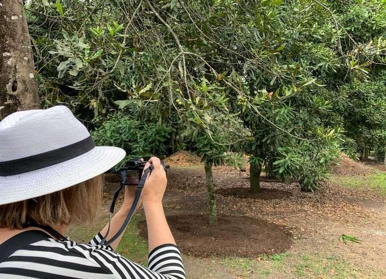 Makadamiaviljelmä Guatemala Unescon maailmaperintökohteet Antigua