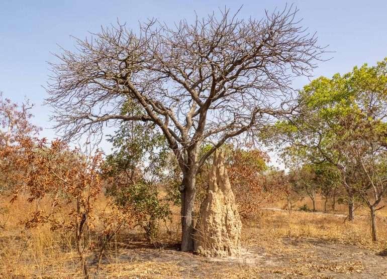 Fathala Senegal
