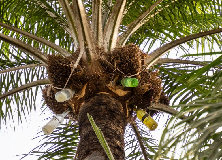 Palmuviini Gambia