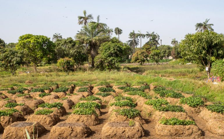 Tonbi riisipellot Gambia