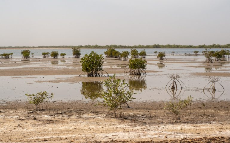 Mangrovea Senegal