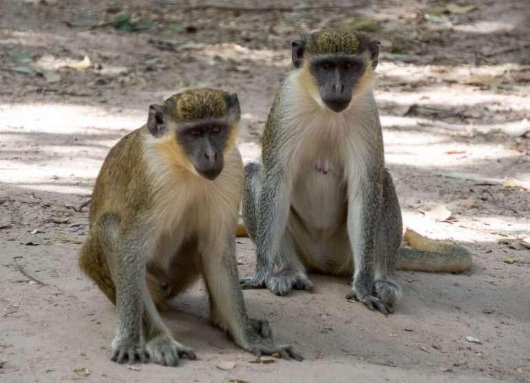 Bijolon apinapuisto