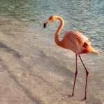 Aruba – onnellinen saari