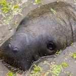 Guyanan oudot eläimet