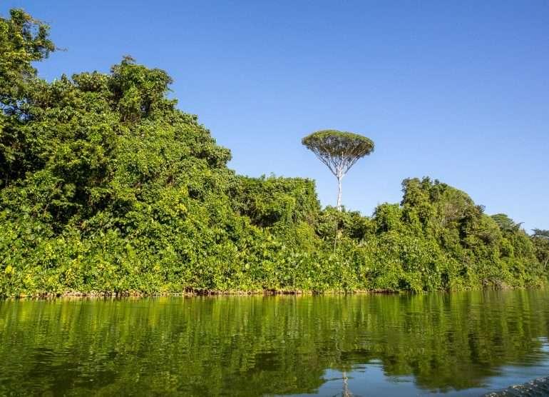 Bergendal Suriname-joki