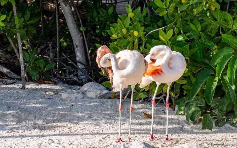 Lasten flamingot