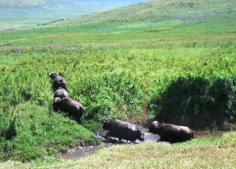 Ngorongoro Tansania