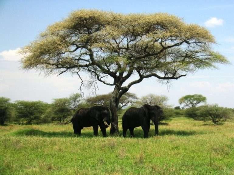 Tarangire norsuja kohteena Serengeti