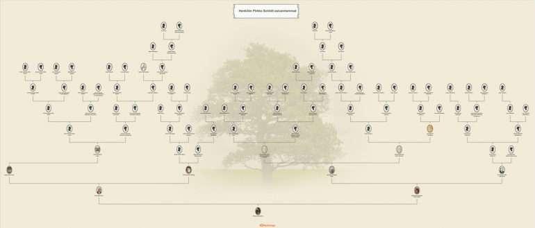 Myheritage sukupuu