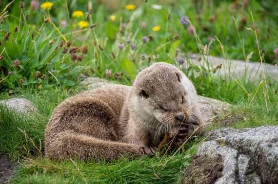 Saukko Atlanterhavsparken Ålesund