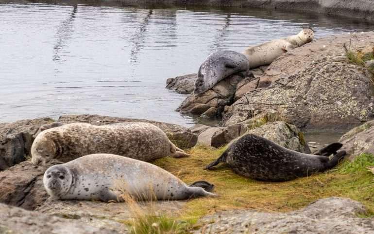 Hylje Atlanterhavsparken Ålesund