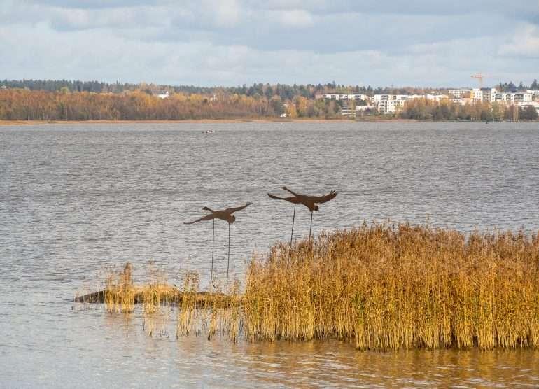 Halosenniemi Tuusulanjärvi joutsenet järvellä