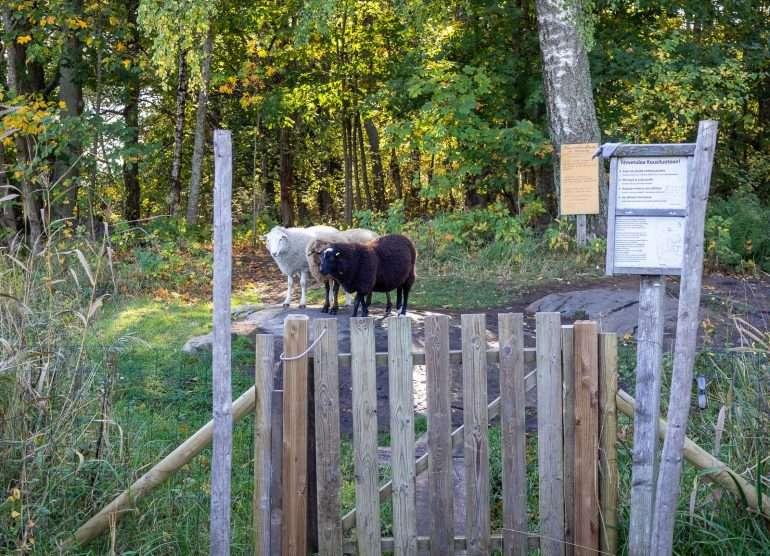 Lammassaari ja Kuusiluoto