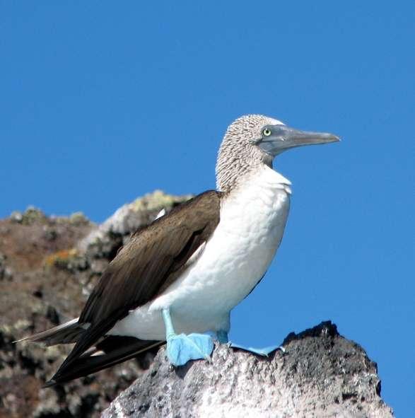 Galapagos 2006 Maat 33-48
