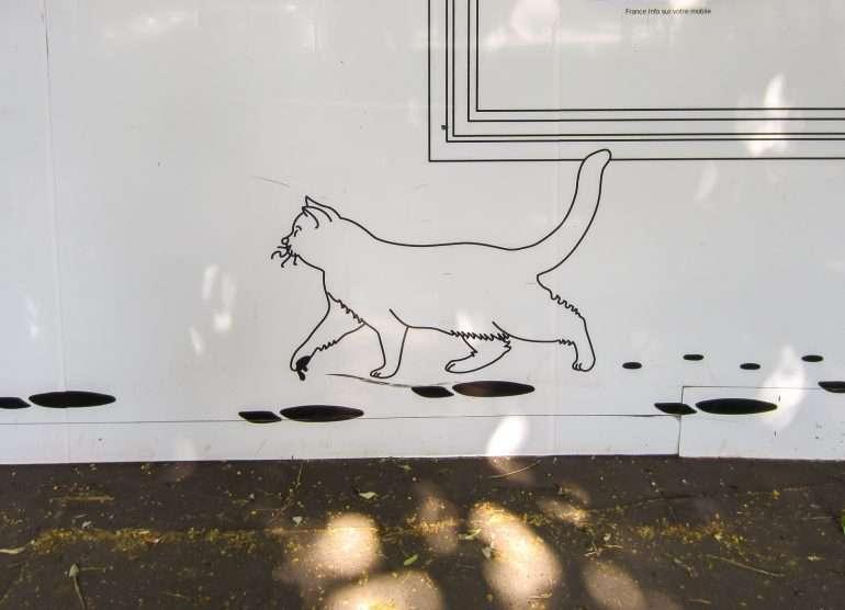 Pariisi kissa