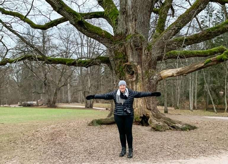 Espoon paksuin puu Träskandan kartano ja Glimsinjoen luontopolku
