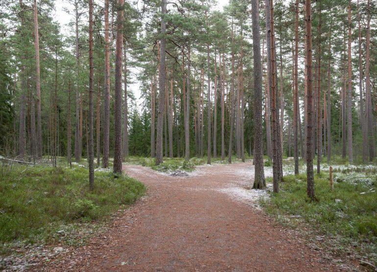 Hienoinen lumipeite jo Tapaninpäivänä metsässä