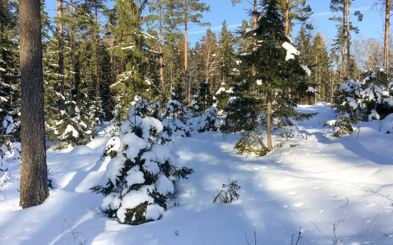 Lumikenkäily metsässä