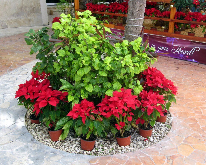Joulutunnelmaa Cozumel Meksiko