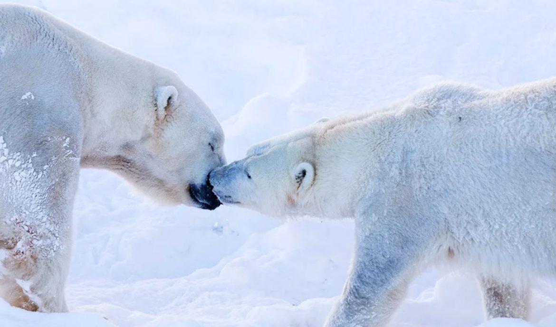 Jääkarhut Ranua Kevään matkasuunnitelmat