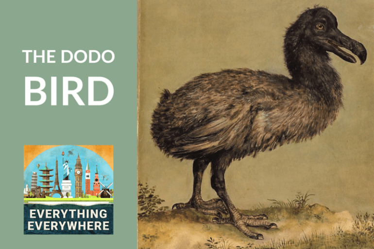 Dodo Everything Everywhere