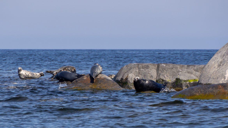 Itämerenhylkeitä 3 majakkaa 3 kansalllispuistoa