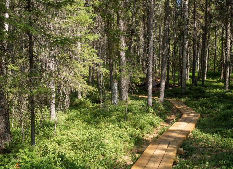Aarnipolku Seitsemisen luonnonpuisto