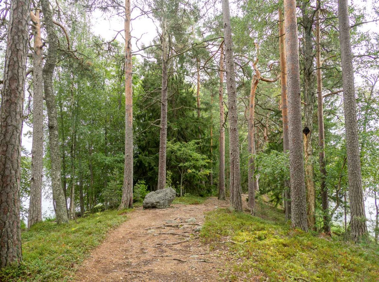 Puurijärvi Isosuo Liesjärvi
