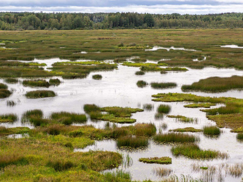 Puurijärvi-Isosuo