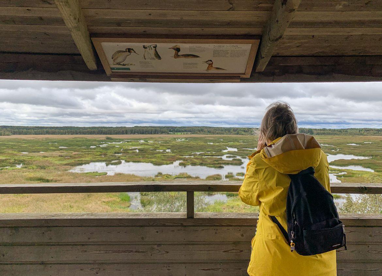 Puurijärvi Puurijärvi Isosuo Liesjärvi